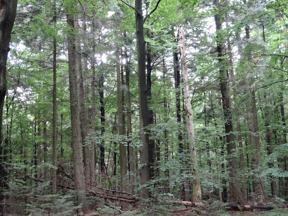 Na zdjęciu las mieszany.
