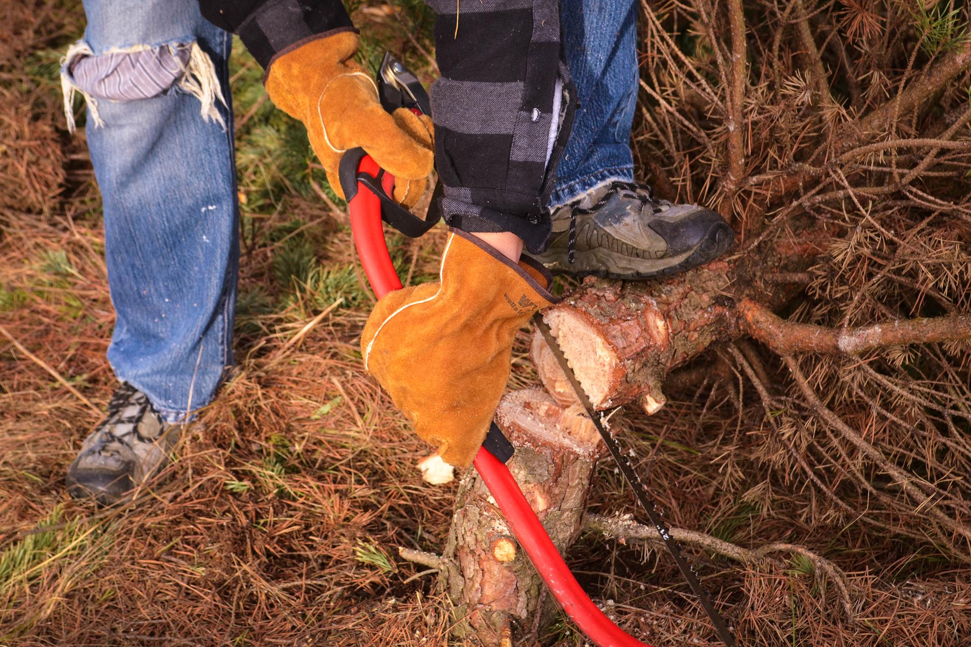 Zdjęcie przedstawiające osobę ścinającą cienkie drzewo za pomocą ręcznej piły.
