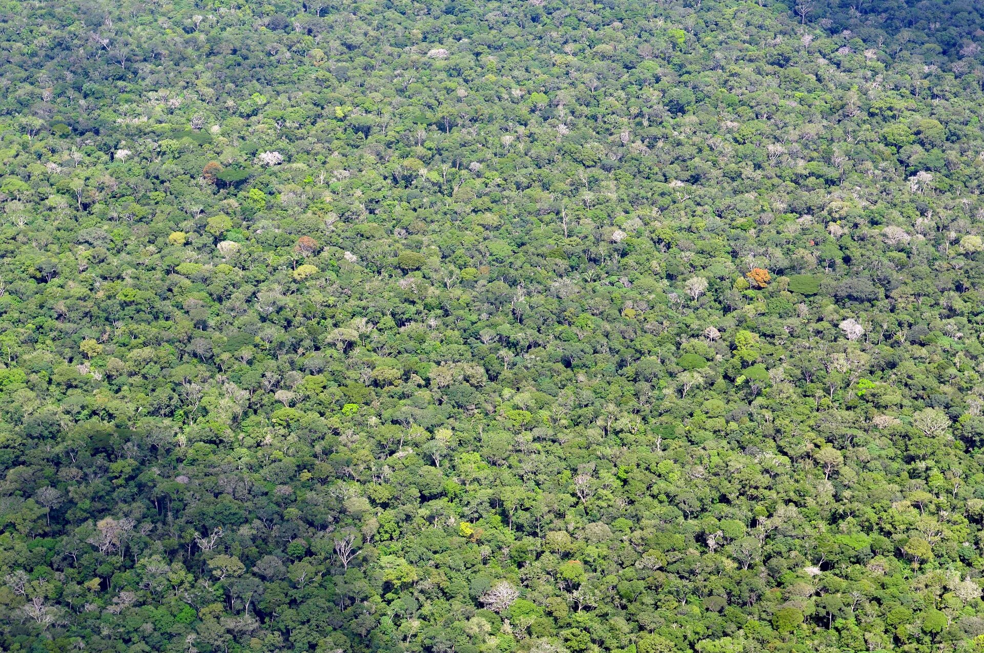 Fotografia druga wykonana zgór, prezentuje zwartą warstwę zielonych koron drzew.