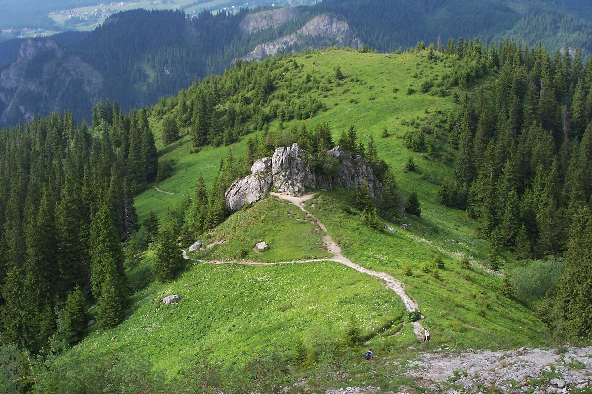 Fotografia prezentuje wygląd regla górnego. Na fotografii widoczne wzniesienie zporastającym je lasem świerkowym.