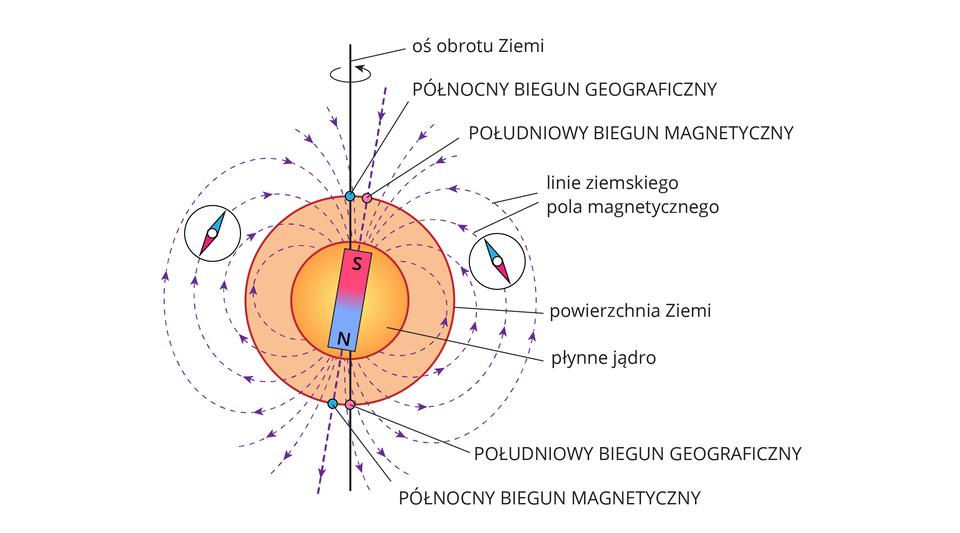 Ilustracja prezentuje różnice między biegunami magnetycznymi ageograficznymi.Na ilustracji pokazano kulę ziemską. Jej oś obrotu wyznacza biegun geograficzny, który nie pokrywa się zbiegunem magnetycznym Ziemi, znajdującym się wjądrze Ziemi. Linie pola magnetycznego Ziemi odchylają się wniewielkim stopniu od biegunów geograficznych. Igły kompasu układają się zgodnie zkierunkiem linii pola magnetycznego.