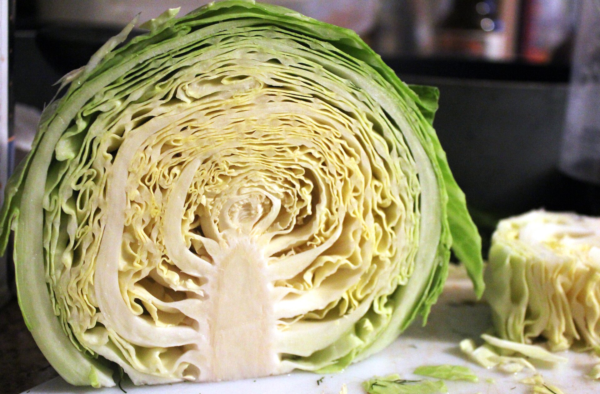 Fotografia przedstawia przekrojoną główkę kapusty. Zbiałej, krótkiej łodygi (głąba) wyrastają mocno pozwijane liście. Kapusta wgłąbie gromadzi substancje pokarmowe.