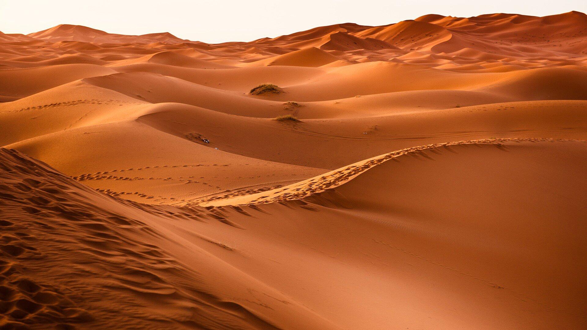 Zdjęcie przedstawia fragment pustyni piaszczystej. Po horyzont ciągną się duże piaszczyste wydmy.