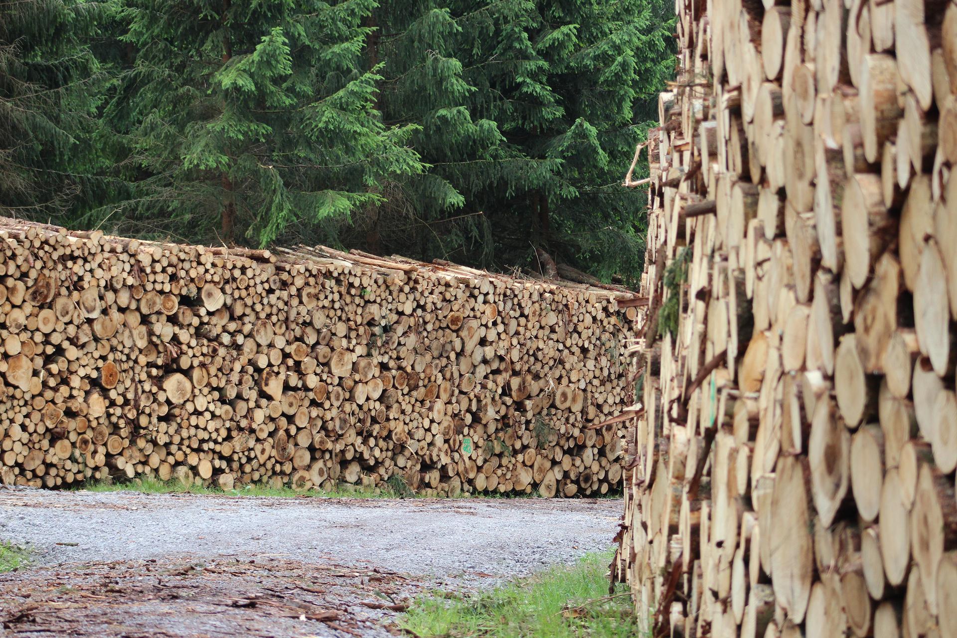 Fotografia prezentuje stosy pociętego drewna opałowego zgromadzone wzdłuż leśnej drogi.