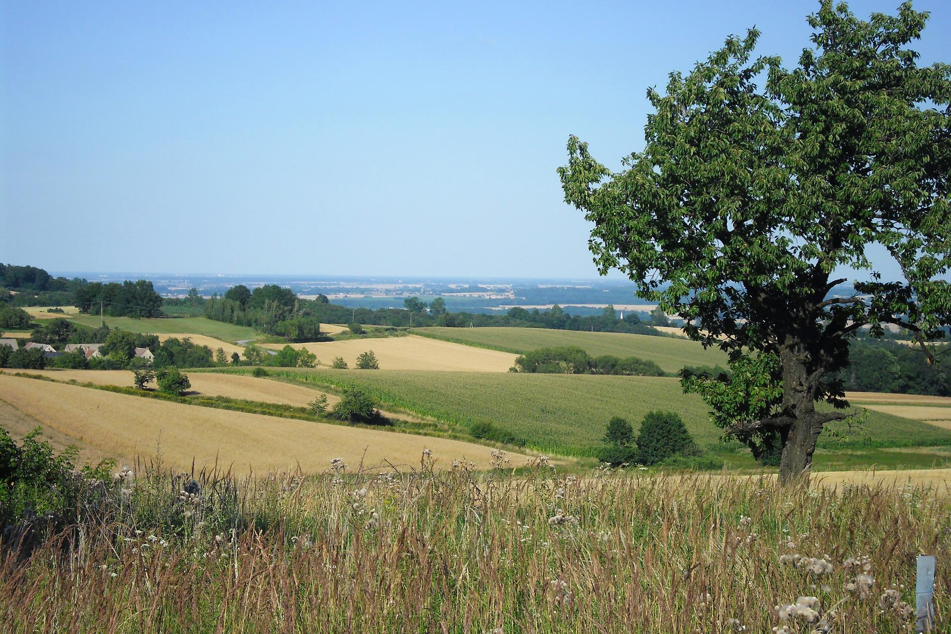 Fotografia druga prezentuje krajobraz pół iłąk strefy umiarkowanej.