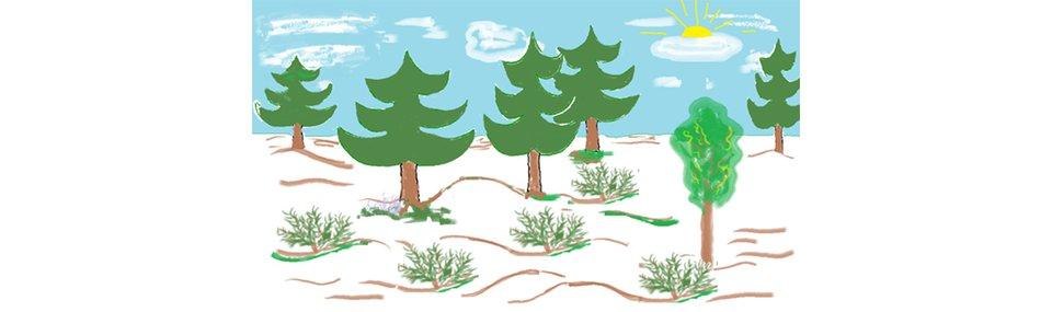 Ilustracja przedstawiająca las