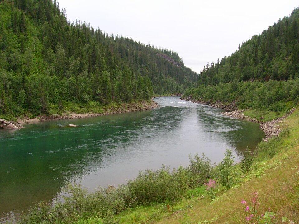 Dolina okształcie litery fał. Dnem doliny płynie rzeka. Czysta krystaliczna woda. Zbocza doliny porośnięte są lasem iglastym. Na pierwszym planie brzeg rzeki porośnięty trawą. Różowe kwiaty.