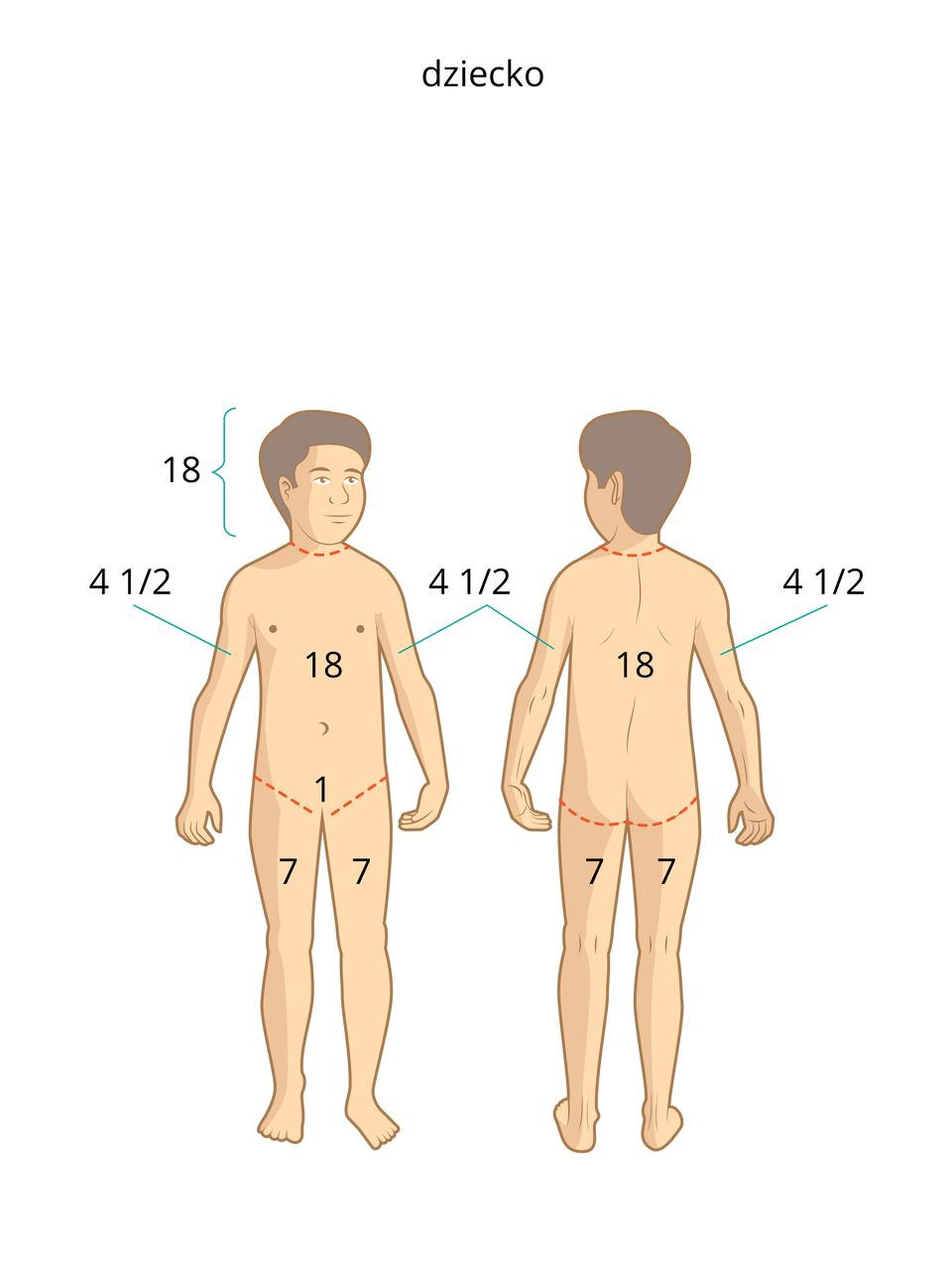 Ilustracja 2, dziecko wwieku szkolnym. Różne liczby umieszczone są: liczba 18 to głowa, korpus oraz plecy. Liczba 7 to uda. Liczba 1 umieszczona na kroczu. Liczba 4 ½ znajduje się powyżej łokci.