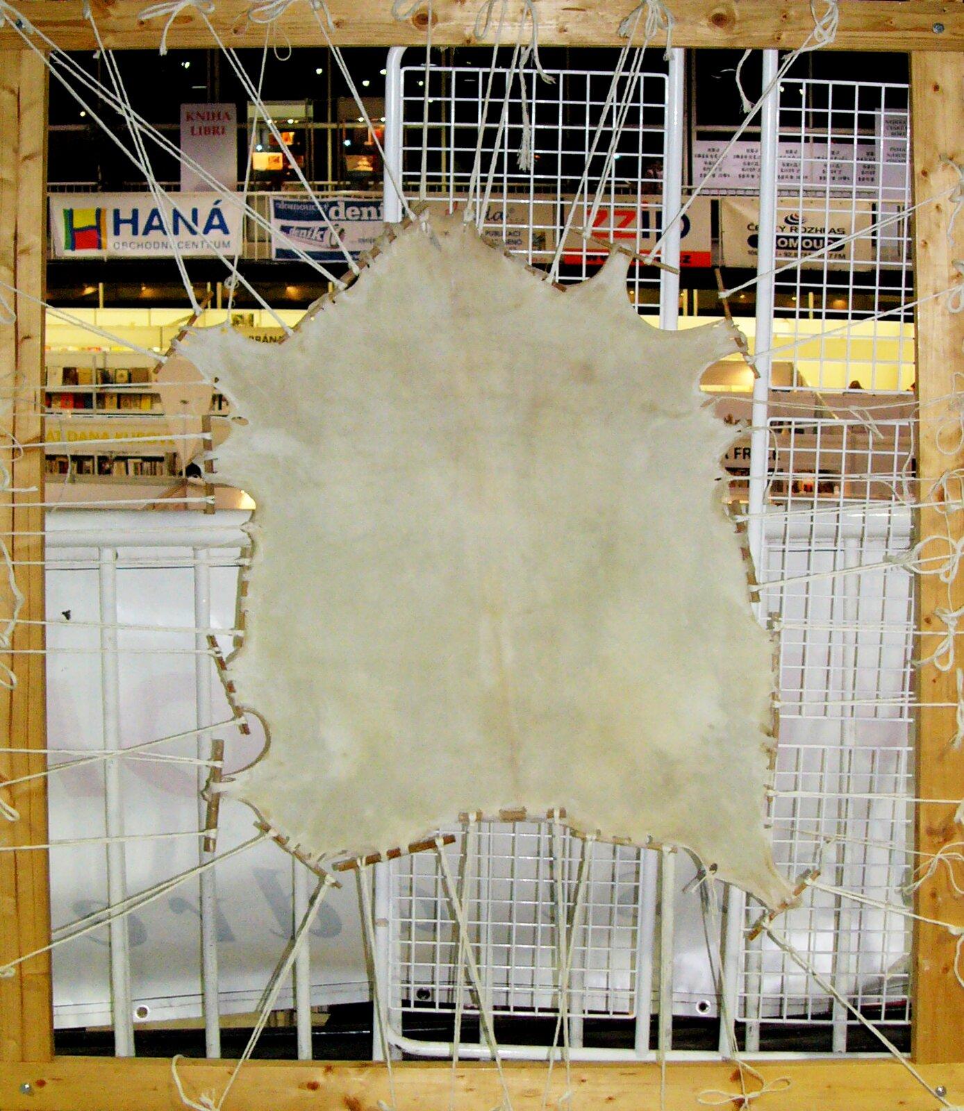 Przygotowywanie pergaminu ze skóry kozy Przygotowywanie pergaminu ze skóry kozy Źródło: Michal Maňas, Wikimedia Commons, licencja: CC BY 2.5.
