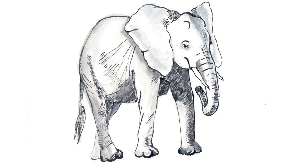 Rysunek słonia.