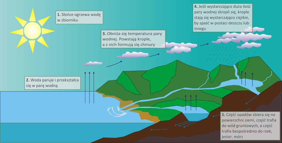 Na ilustracji schemat krążenia wody. Narysowano fragment lądu, zbiornik wodny, rzekę ijeziora, chmury isłońce. Wszystkie wody znajdujące się na powierzchni Ziemi parują, co oznaczono strzałkami, czyli zmieniają się wparę wodną, która watmosferze ochładza się skrapla, by ponownie spaść na Ziemię jako opad atmosferyczny, co również oznaczono na rysunku. Woda, która spada na powierzchnię Ziemi wpostaci deszczu lub śniegu spływa do najbliższej rzeki (a dalej do morza), atakże wsiąka wglebę, zasilając wody podziemne. Spod ziemi wypływa na powierzchnię jako źródło dające początek rzece, która wpada do innej, większej lub do jezior imórz.