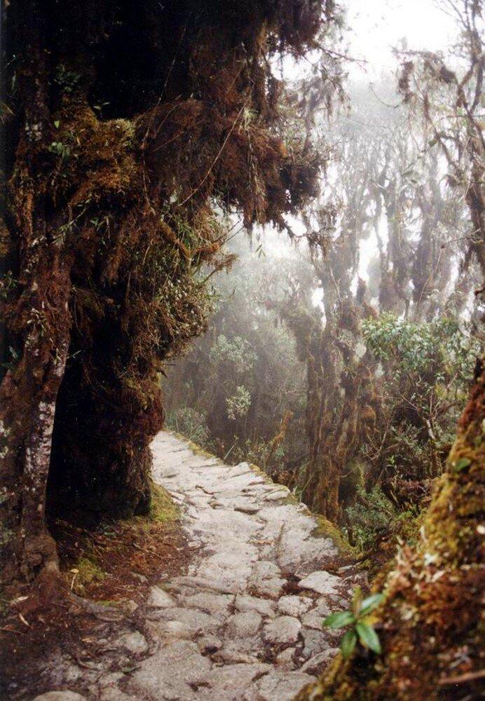 Droga inkaska wokolicach Machu Picchu Droga inkaska wokolicach Machu Picchu Źródło: Pajaro, domena publiczna.