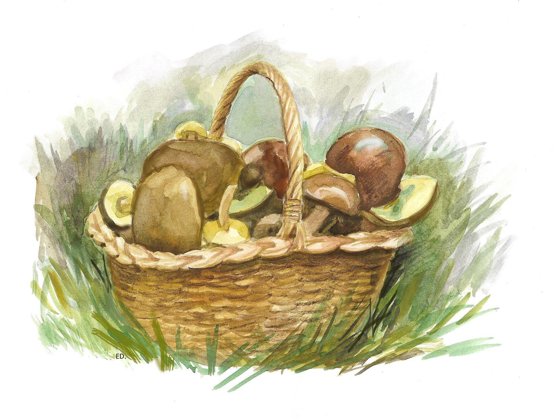 Ilustracja przedstawiająca grzyby wkoszu