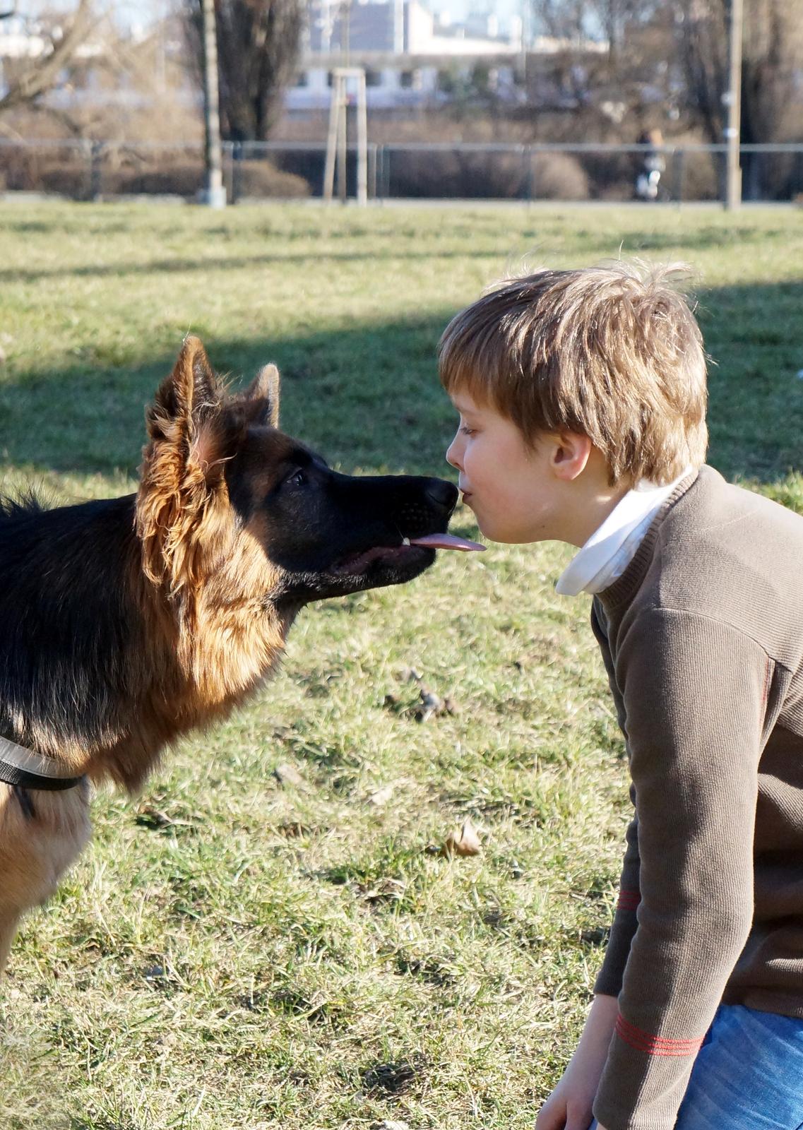 Fotografia przedstawia psa owczarka niemieckiego idziecko wbeżowym sweterku na łące. Pies ma wysunięty do twarzy dziecka język. Chłopiec całuje psa wnos.