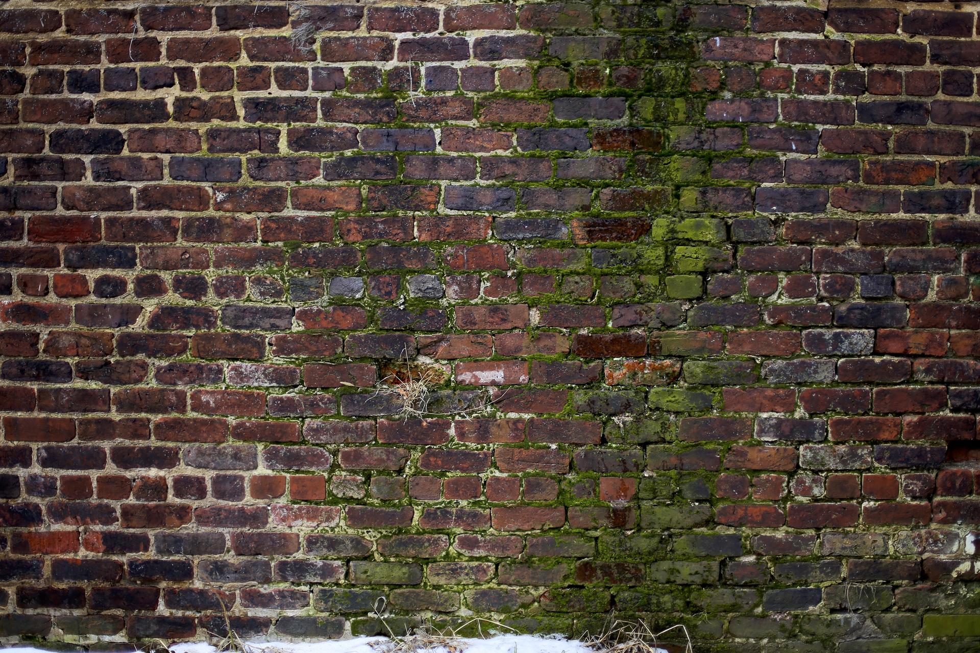 Zdjęcie muru porośniętego mchem