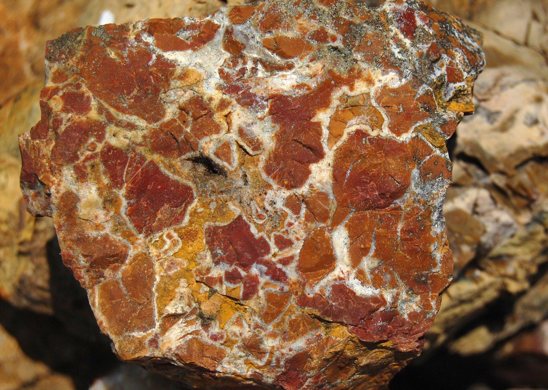 Zdjęcie przedstawia nieoszlifowany jaspis wzbliżeniu. Wkamieniu widoczne są bordowe, żółtawe ipomarańczowe plamy oddzielone od siebie białymi cienkimi warstwami.