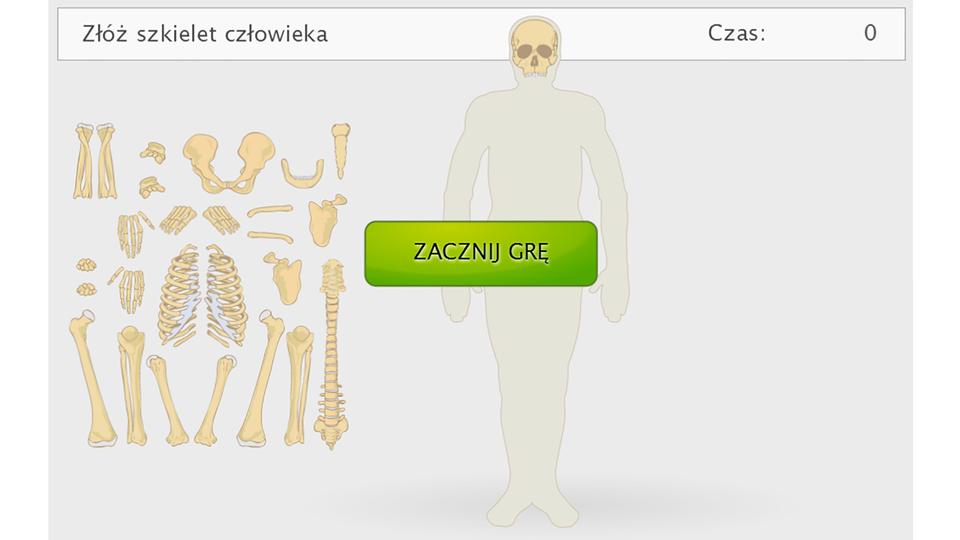 Złóż szkielet człowieka