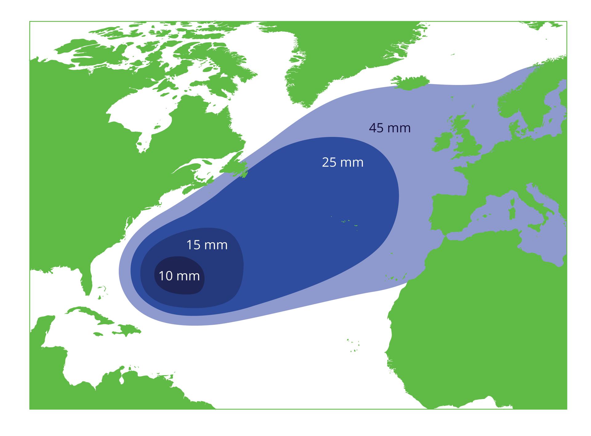 Ilustracja przedstawia fragment mapy północnej półkuli. Kontynenty wkolorze zielonym, morze białym. Na morzu koncentryczne owale wróżnych odcieniach niebieskiego. Wgranatowym polu miejsce tarła węgorza europejskiego wMorzu Sargassowym. Liczby pokazują średnią wielkość narybku, dryfującego zprądem zatokowym zpowrotem do rzek, zktórych przypłynęły osobniki dorosłe. Ostania szaroniebieska nieregularna plama narybku owielkości 45 milimetrów sięga mórz: Północnego, Bałtyckiego iŚródziemnego.