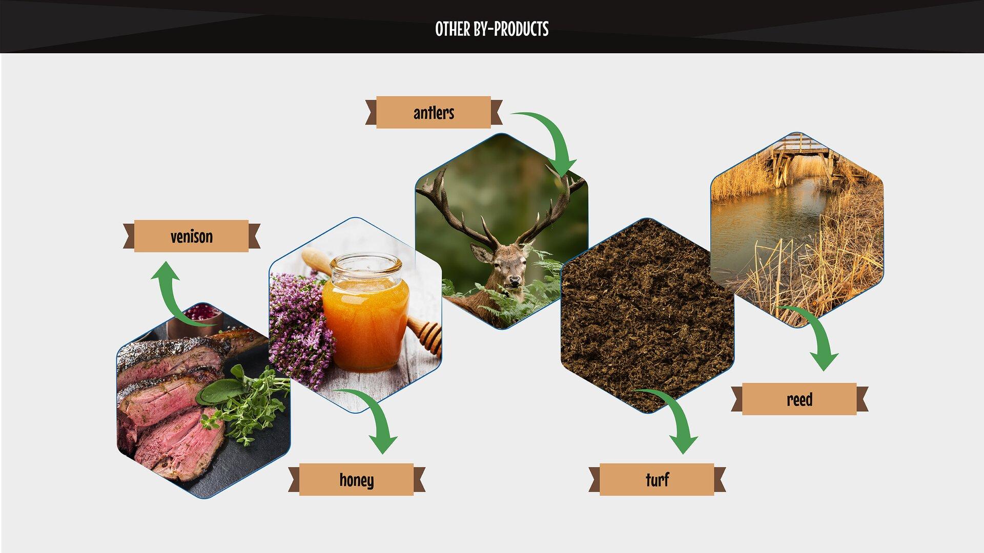 The photo presents other by-products: venison, honey, antlers, turf, reed. Grafika przedstawia inne użytki uboczne - dziczyzna, miód, poroże, torf, trzcina.