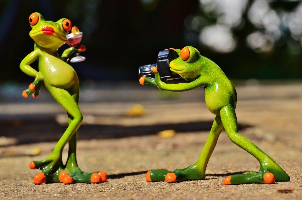 żaby Źródło: licencja: CC 0.