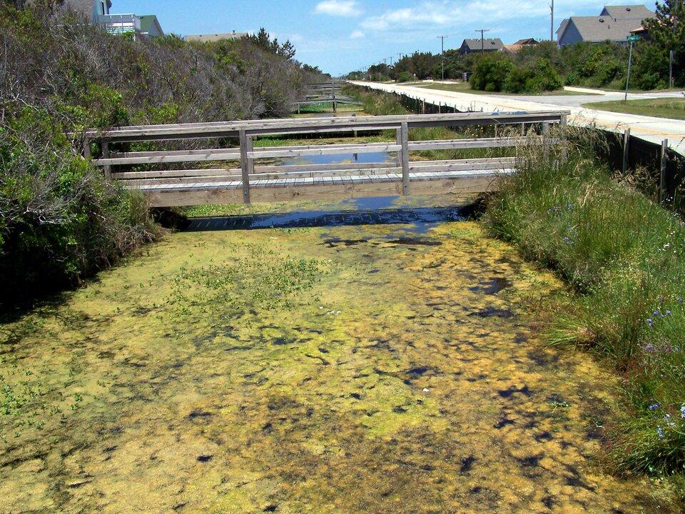 Wzanieczyszczonych zbiornikach wodnych, zagrożonych eutrofizacją, dochodzi do silnego rozwoju glonów itzw. zakwitu wód