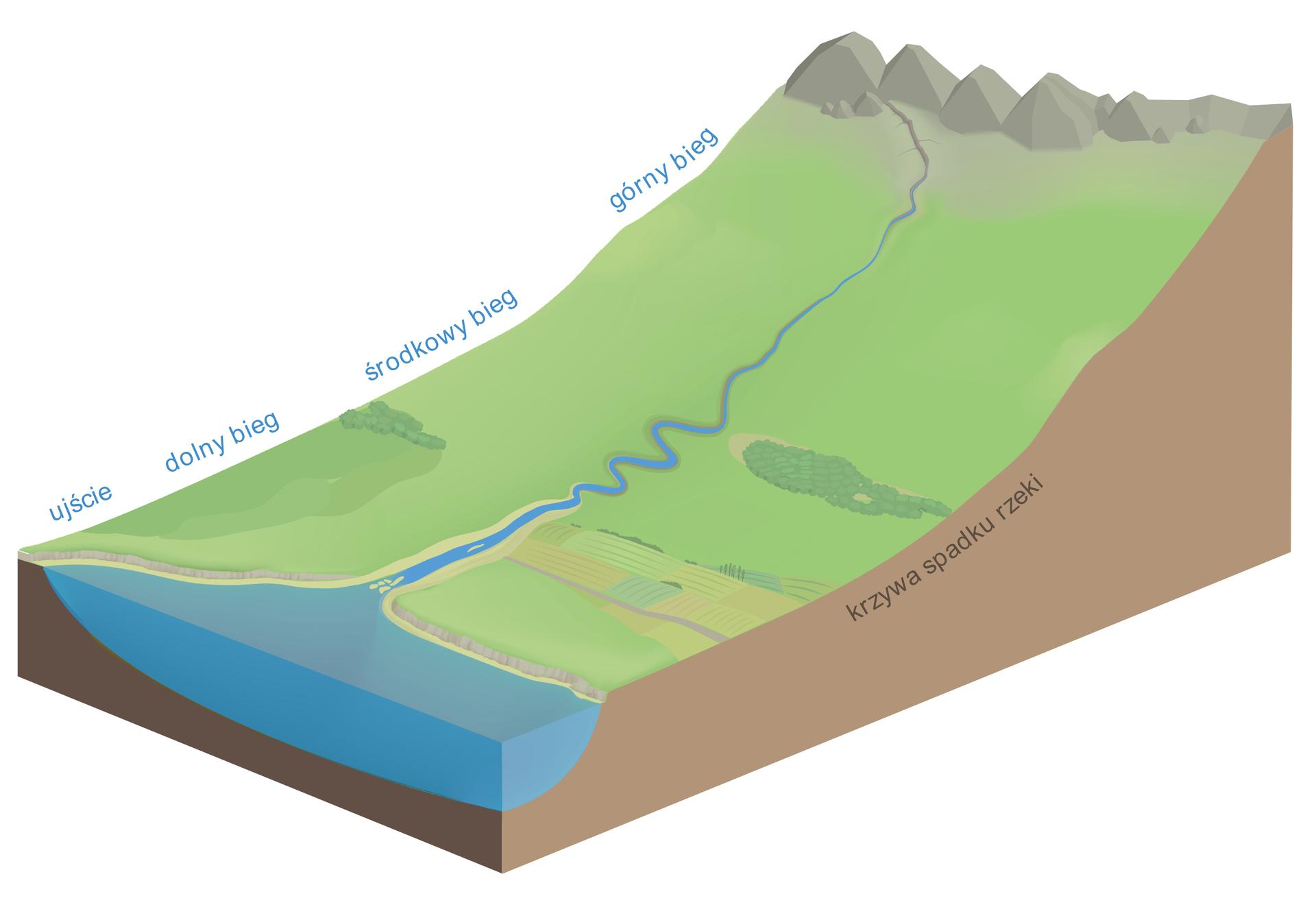 Ilustracja przedstawia wycinek Ziemi. Fragment powierzchni Ziemi jest nachylony, porośnięty trawą. Zgóry płynie rzeka. Wdole zbiornik wodny. Na skraju wycinka opisano odcinki biegu rzeki: górny, środkowy idolny. Opisano jeszcze ujście.