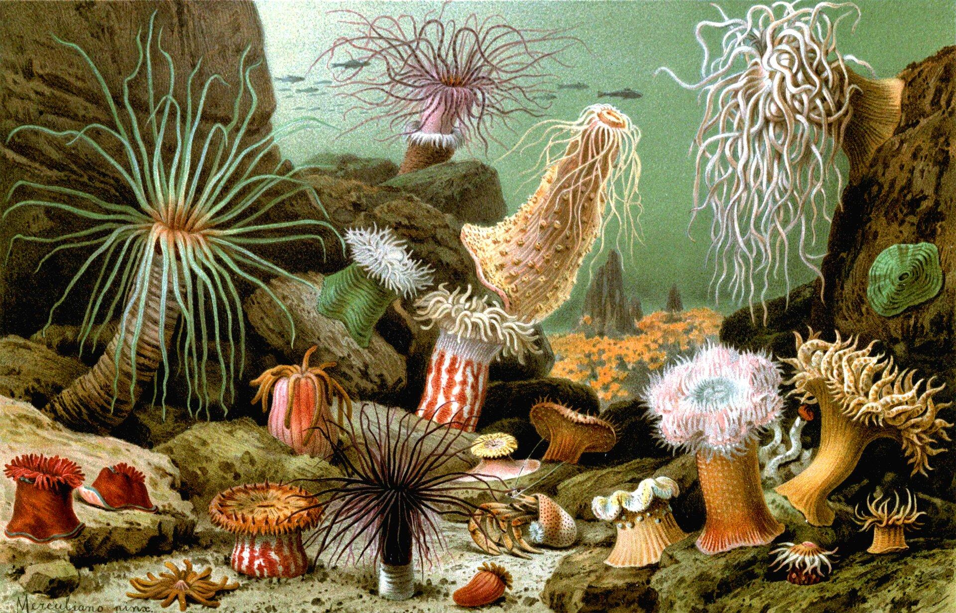 Ilustracja przedstawia dno morza zszarymi skałami po bokach. Na piasku ina skałach rosną rurkowate, barwne ukwiały. Mają długie lub krótsze, cienkie lub grubsze ramiona. Między nimi znajduje się rak pustelnik zodwłokiem wnakrapianej pomarańczowo muszli.