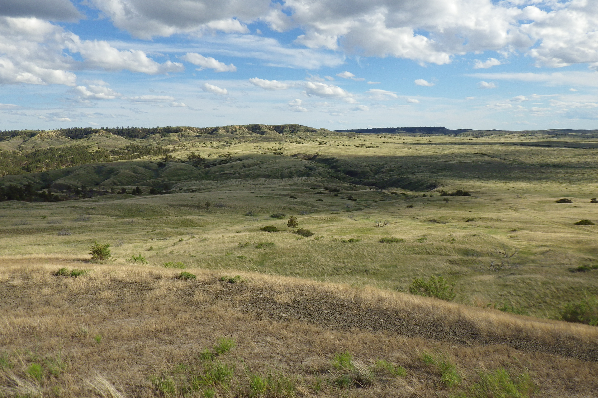 Zdjęcie przedstawiające step. Teren jest płaski, zwzniesieniami na horyzoncie. Ziemia jest porośnięta wychsniętą trawą.
