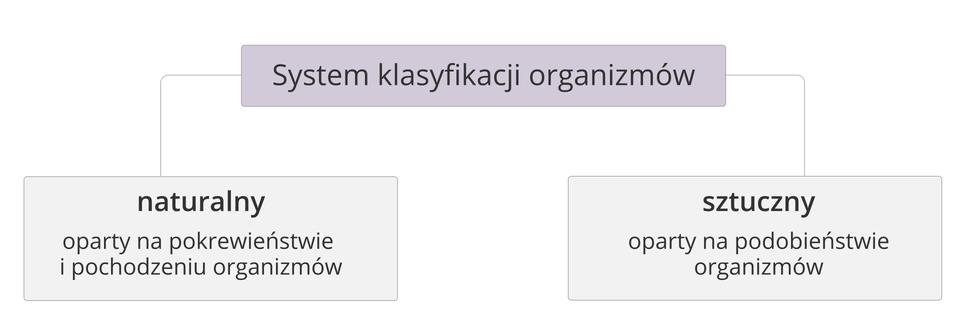Ilustracja przedstawiająca typy systemów klasyfikacji organizmów