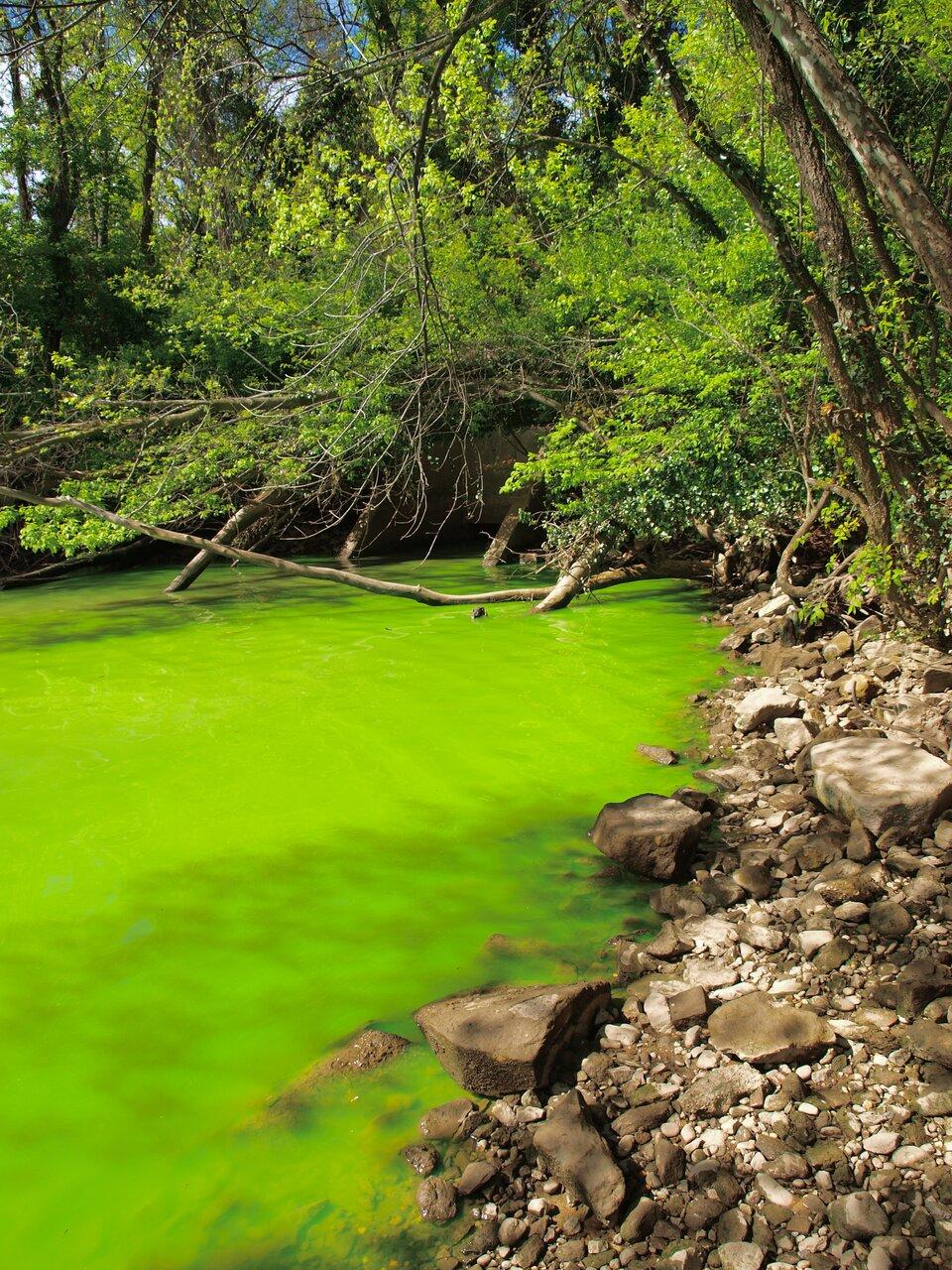 Eutrofizacja rzeki Potomak (wschodnia część USA)