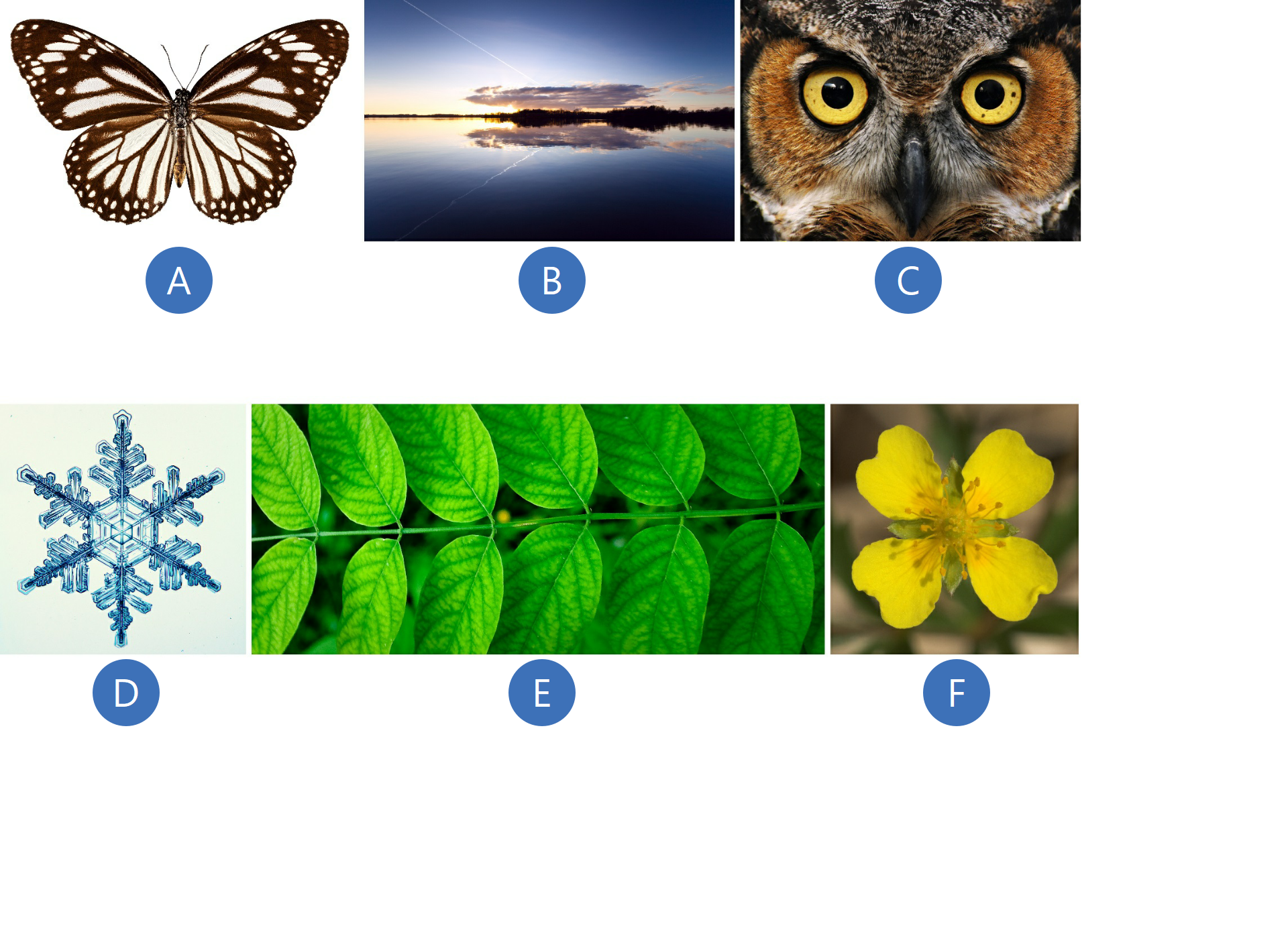 Pierwsza ilustracja przedstawia motyla obrązowo-białych skrzydłach. Druga ilustracja przedstawia zachód słońca nad jeziorem. Chmura ilas odbijają się wtafli wody. Trzecia ilustracja przedstawia głowę sowy. Widać duże, żółte oczy zczarną kropką wśrodku ibrązowe upierzenie wokół oczu. Czwarta ilustracja przedstawia płatek śniegu wbardzo dużym przybliżeniu. Widać rozkład lodowych słupków składających się na ramiona śniegowego płatka. Piąta ilustracja przedstawia zieloną gałązkę zliśćmi akacji. Szósta ilustracja przedstawia żółtego kwiatka oczterech płatkach, awśrodku widać pręciki kwiatowe.