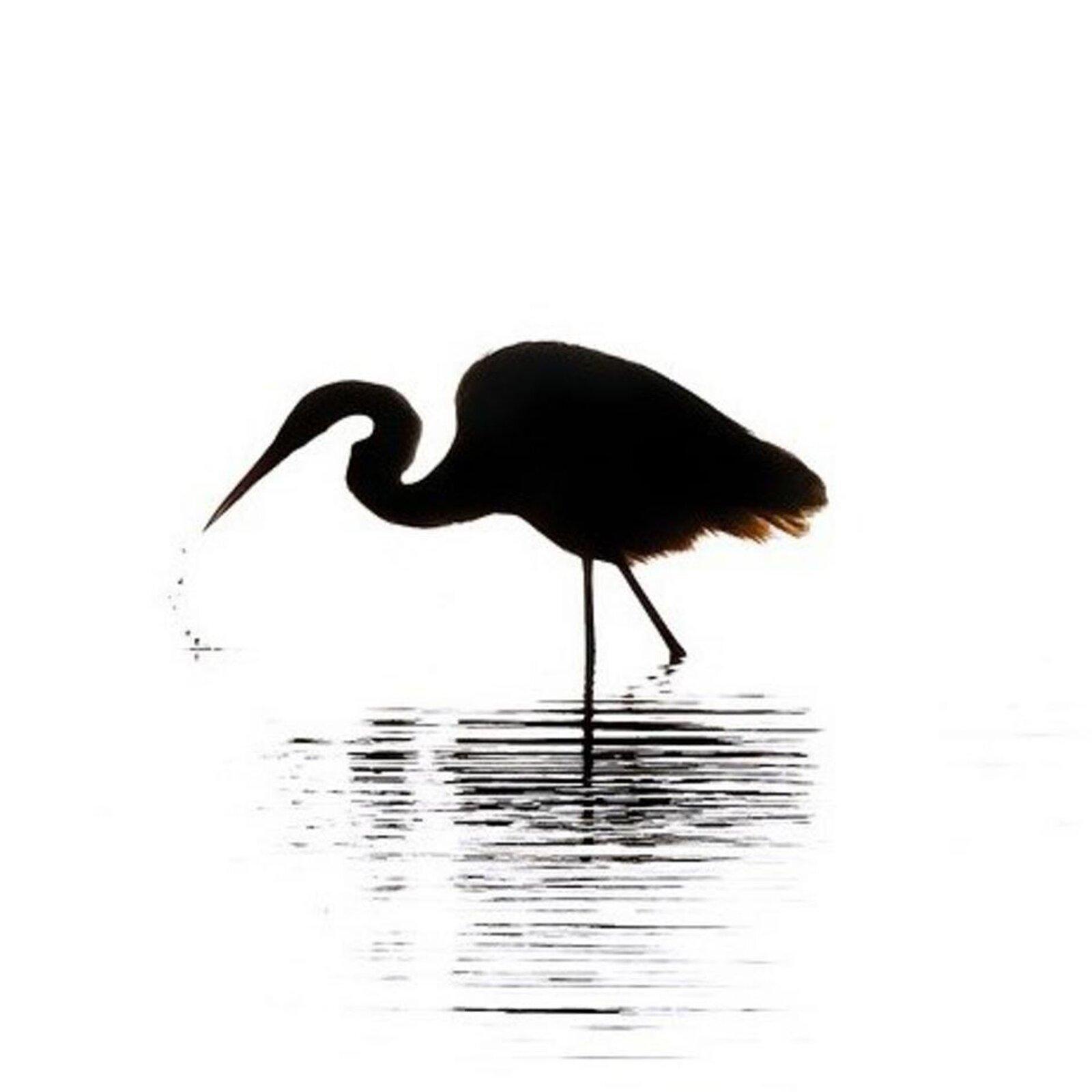 Cień ptaka stojącego wwodzie na długich, chudych nogach. Ptak ma również długą szyję idługi, spiczasty dziób.