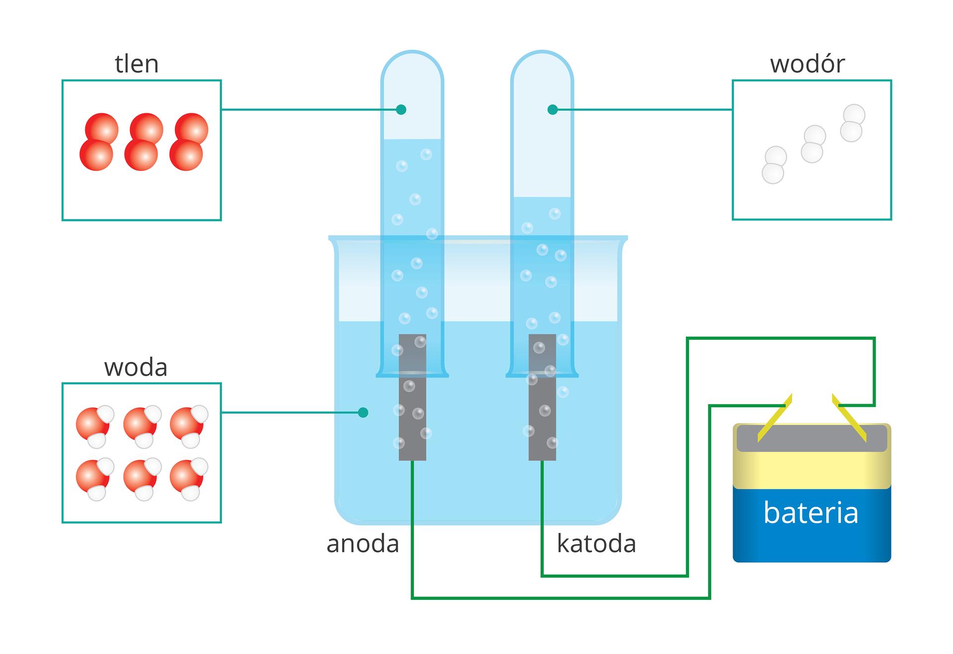 Rysunkowe, schematyczne przedstawienie procesu elektrolizy wody. Centralną część rysunku zajmuje wypełnione wodą naczynie wpostaci zlewki, wktórym zanurzone są dwie elektrody - anoda ikatoda. Nad każdą zelektrod zanurzona jest wwodzie iwypełniona nią odwrócona do góry dnem probówka. Elektrody podłączono do dwóch biegunów baterii, ana rysunku wydzielają się wokół nich pęcherzyki gazów, które częściowo wypełniają obie probówki. Ilustracje uzupełniają nazwy substancji obecnych na schemacie wraz zrysunkami przedstawiającymi ich cząsteczki: woda wzlewce, tlen wprobówce nad anodą oraz wodór wprobówce nad katodą. Różnica poziomów wody wobu probówkach sugeruje, że wodoru wydzielającego się przy katodzie jest dwukrotnie więcej, niż tlenu pochodzącego zanody.