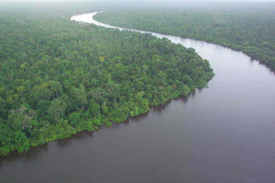 Na zdjęciu lotniczym rozległe, płaskie połacie gęstego, wilgotnego lasu równikowego przez który przepływa szeroka rzeka.