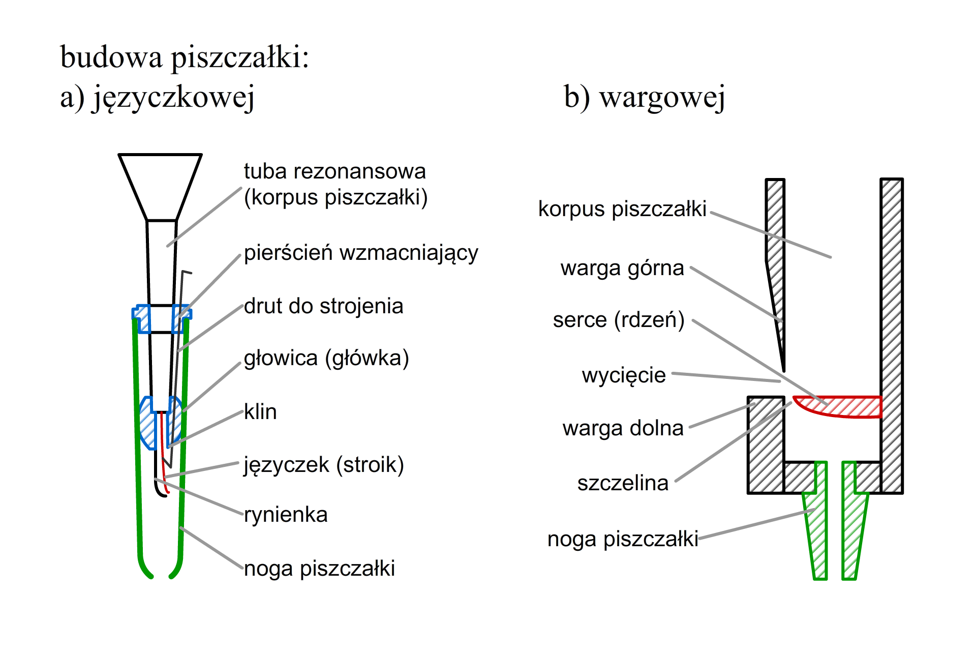 Schemat budowy piszczałki stroikowej iwargowej. Piszczałka stroikowa ustawiona jest na nodze piszczałki. Wtej części umieszczona jest tuba rezonansowa stabilizowana przez pierścień wzmacniający. Ztuby rezonansowej na dole wystają rynienka ijęzyczek (stroik). Piszczałka wargowa również ustawiana jest na nodze piszczałki. Zbudowana jest zkorpusu piszczałki idwóch warg (dolnej igórnej) pomiędzy którymi znajduje się otwór.