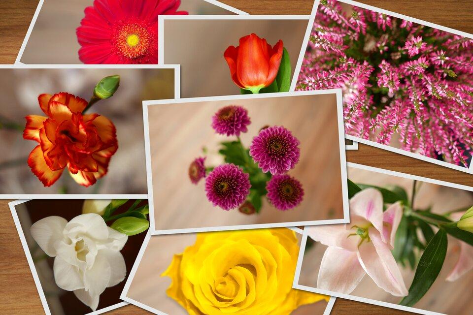 Rysunek kwiatów oróżnych rodzajach kielichów kwiatowych.