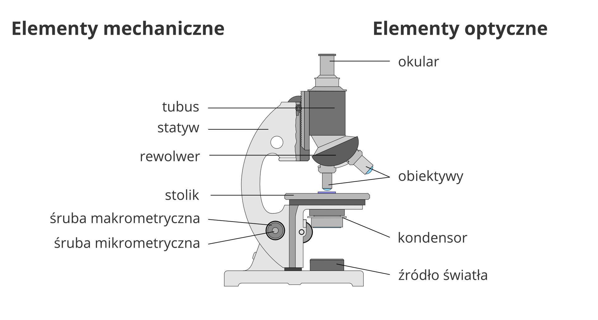 Ilustracja przedstawia mikroskop optyczny. Jego części zostały podpisane na rysunku. Po lewej znajdują się podpisy części mechanicznych: tubus, statyw, rewolwer, stolik iśruby: mikrometryczna imikrometryczna. Po prawej znajdują się podpisy części optycznych: okular, obiektywy, kondensor, źródło światła.Pod rysunkiem mikroskopu znajduje się opis funkcji poszczególnych części.