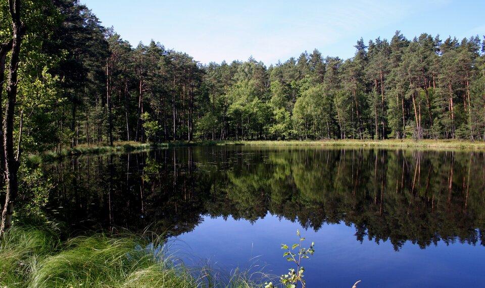Na zdjęciu jezioro. Na drugim brzegu las.