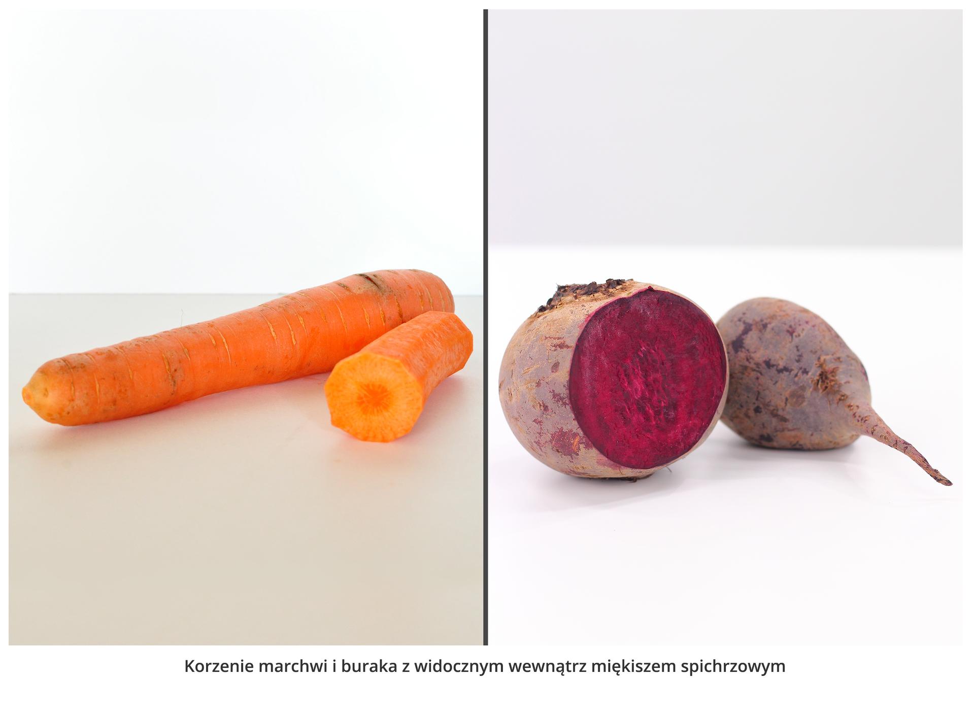 Fotografie przedstawiają dwie pomarańczowe marchwie idwa szaro liliowe buraki. Jedna marchew ijeden burak są przekrojone, żeby uwidocznić miękisz spichrzowy.