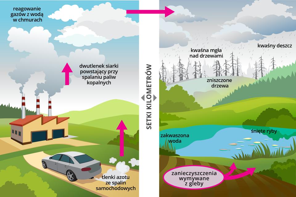 Dwie ilustracje przedstawiają przyczyny powstawania kwaśnych deszczy oraz skutki ich powstawania. Ilustracja po lewej stronie prezentuje samochód jadący drogą, zktórego wydobywają się spaliny ztlenkami azotu. Naprzeciwko drogi znajduje się fabryka, zktórej wydobywaja się dym zawierający dwutlenek siarki. Ilustracja po prawej stronie ukazuje skutki zanieczyszczenia atmosfery wmiejscach oddalonych setki kilometrów od źródeł zanieczyszczenia. Na ilustracji widoczne zniszczone drzewa opadami kwaśnych deszczy, zakwaszona woda wjeziorze ipływające przy powierzchni śnięte ryby oraz zanieczyszczenia wymywane zgleby do wód jeziora.
