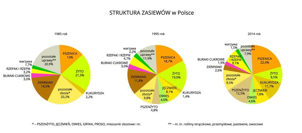Na ilustracji trzy diagramy kołowe – struktura zasiewów wPolsce wlatach 1985, 1995, 2014.Pierwszy diagram: <table><tr><th>uprawa</th><th>1985</th></tr><tr><td>pszenica</td><td>13,0%</td> <tr><td>żyto</td><td>21,3%</td> <tr><td>kukurydza</td><td>2,2%</td> <tr><td>pozostałe zboża</td><td>20,2%</td> <tr><td>ziemniaki</td><td>14,5%</td> <tr><td>buraki cukrowe</td><td>3,0%</td> <tr><td>rzepak irzepik</td><td>3,2%</td> <tr><td>warzywa</td><td>1,7%</td> </tr><td>pozostałe uprawy</td><td>20,9%</td> </tr><table>Drugi diagram: <table><tr><th>uprawa</th><th>1995</th></tr><tr><td>pszenica</td><td>18,7%</td> <tr><td>żyto</td><td>19,0%</td> <tr><td>kukurydza</td><td>1,4%</td> <tr><td>jęczmień</td><td>8,1%</td> <tr><td>owies</td><td>4,6%</td> <tr><td>pszenżyto</td><td>4,8%</td> <tr><td>pozostałe zboża</td><td>9,8%</td> <tr><td>ziemniaki</td><td>11,8%</td> <tr><td>buraki cukrowe</td><td>3,0%</td> <tr><td>rzepak irzepik</td><td>4,7%</td> <tr><td>warzywa</td><td>2,2%</td> </tr><td>pozostałe uprawy</td><td>11,9%</td> </tr><table> Trzeci diagram: <table><tr><th>uprawa</th><th>2014</th></tr><tr><td>pszenica</td><td>22,4%</td> <tr><td>żyto</td><td>8,5%</td> <tr><td>kukurydza</td><td>11,7%</td> <tr><td>jęczmień</td><td>7,8%</td> <tr><td>owies</td><td>4,6%</td> <tr><td>pszenżyto</td><td>12,5%</td> <tr><td>pozostałe zboża</td><td>9,5%</td> <tr><td>ziemniaki</td><td>2,6%</td> <tr><td>buraki cukrowe</td><td>1,9%</td> <tr><td>rzepak irzepik</td><td>9,1%</td> <tr><td>warzywa</td><td>1,5%</td> </tr><td>pozostałe uprawy</td><td>7,9%</td> </tr><table>