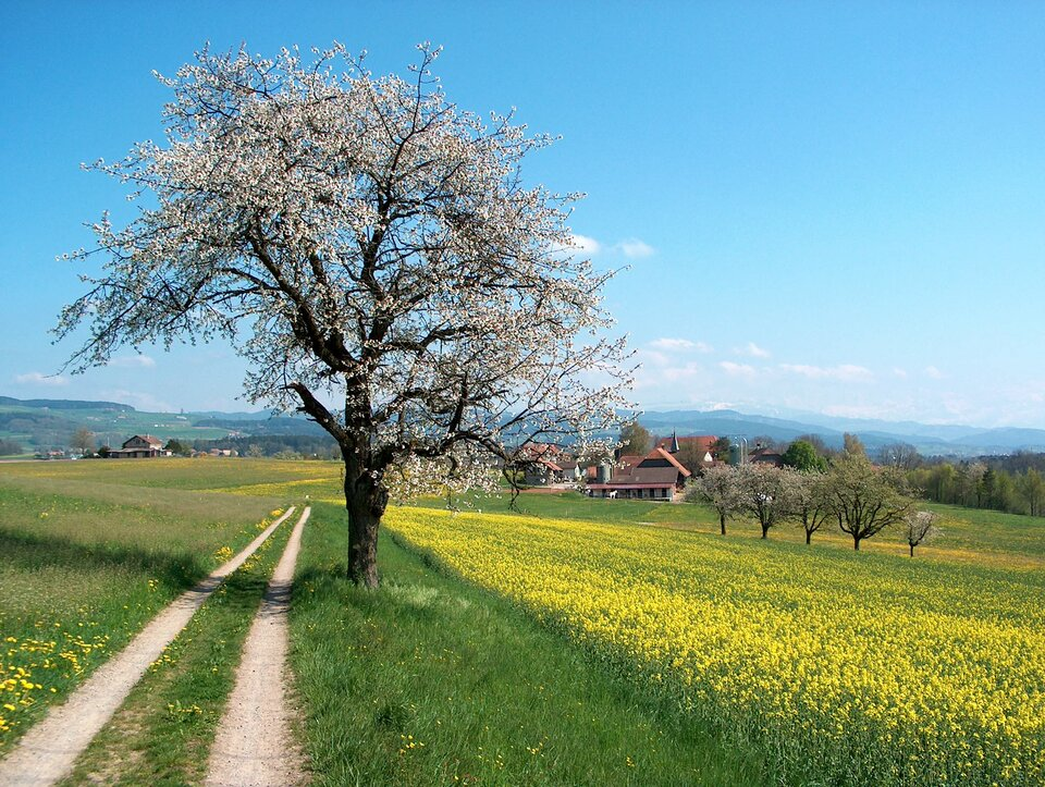 Krajobraz wiosenny Źródło: Benjamin Gimmel, Krajobraz wiosenny, 2004, licencja: CC BY-SA 3.0.
