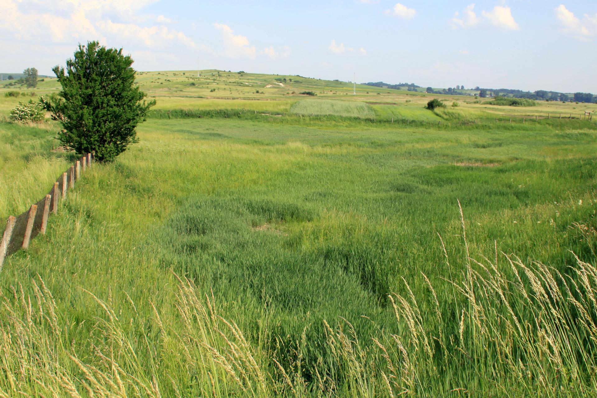 Fotografia przedstawia łąkę włagodnej dolinie. Zlewej znajduje się ogrodzenie idrzewo. To rezerwat słonorośli Owczary wwwojewództwie świętokrzyskim.