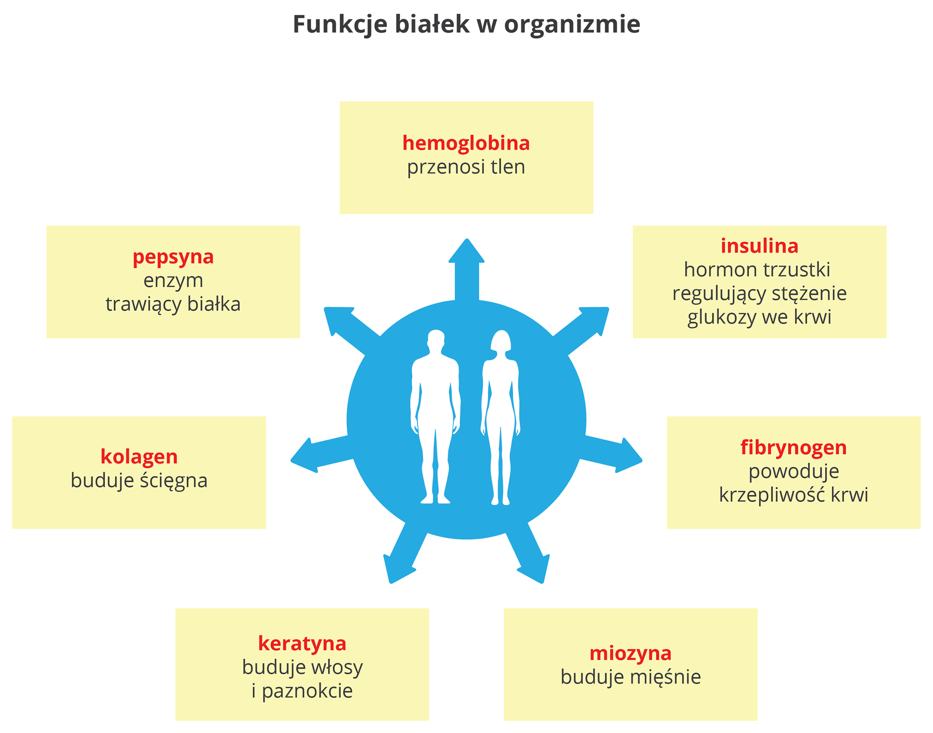 Funkcje białek worganizmie