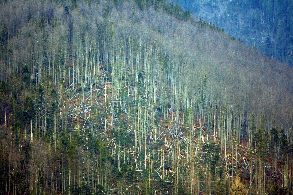 Na zdjęciu powalone ipołamane drzewa.