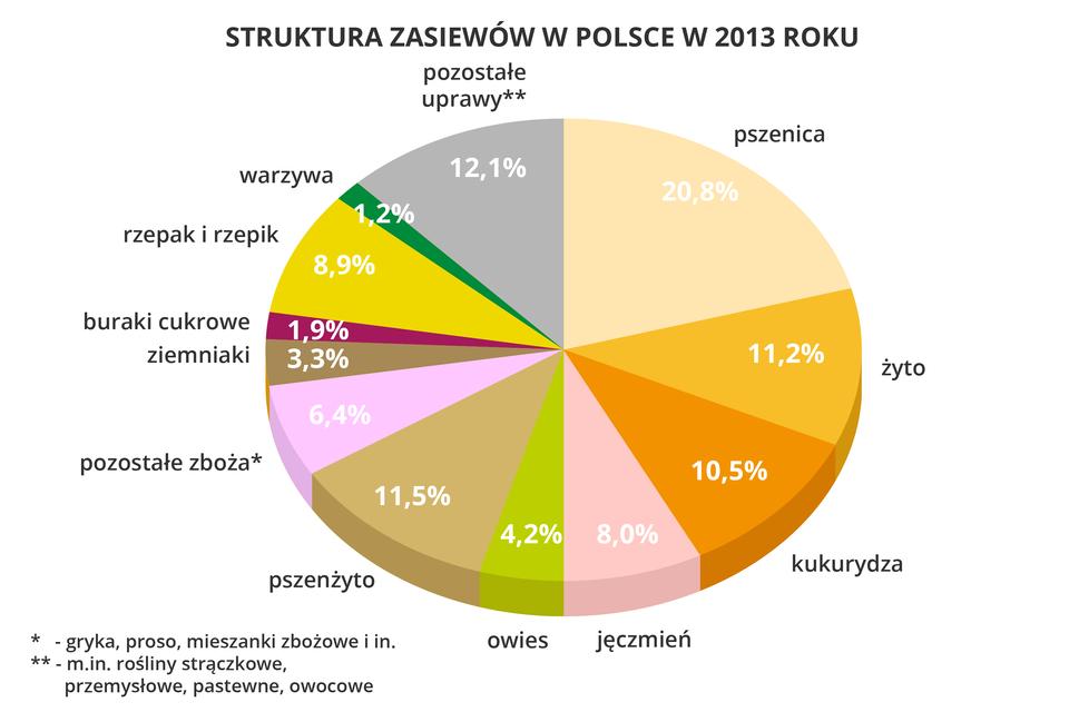 Na ilustracji diagram kołowy struktury zasiewów wPolsce w2013 roku. <table><tr><td>Pszenica</td><td>20,80%</td></tr><tr><td>Żyto</td><td>11,20%</td></tr><tr><td>Kukurydza</td><td>10,50%</td></tr><tr><td>Jęczmień</td><td>8,00%</td></tr><tr><td>Owies</td><td>4,20%</td></tr><tr><td>Pszenżyto</td><td>11,50%</td></tr><tr><td>Pozostałe zboża</br>(gryka, proso,</br>mieszanki zbożowe)</td><td>6,40%</td></tr><tr><td>Ziemniaki</td><td>3,30%</td></tr><tr><td>Buraki cukrowe</td><td>1,90%</td></tr><tr><td>Rzepak irzepik</td><td>8,90%</td></tr><tr><td>Warzywa</td><td>1,20%</td></tr><tr><td>Pozostałe</br>(strączkowe, przemysłowe,</br>owocowe, pastewne)</td><td>12,10%</td></tr></table>