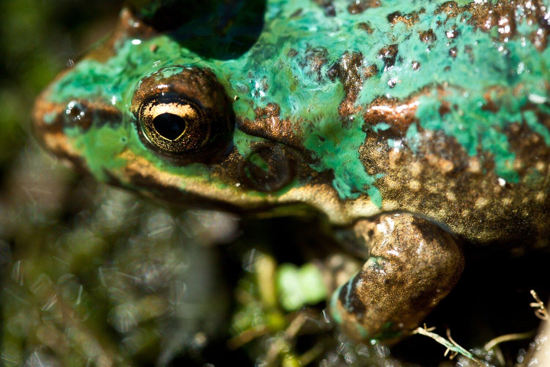 [żaba], [zaba] [żaba], [zaba] Źródło: Małgorzata Skibińska, Contentplus.pl sp. zo.o., fotografia barwna, licencja: CC BY 3.0.