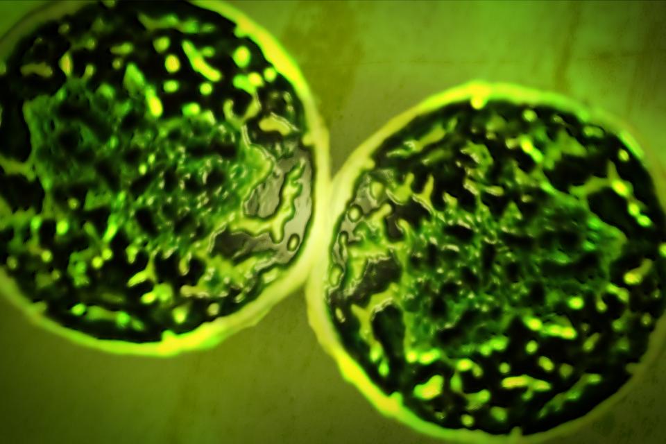 Grafika przedstawiająca mikroorganizmy żyjące wewnątrz kropli oleju. Czarny kolor wobrębie pierścienia to olej. Powierzchnie jasne wobrębie pierścienia to miejsca, gdzie mikroorganizmy skonsumowały już olej.