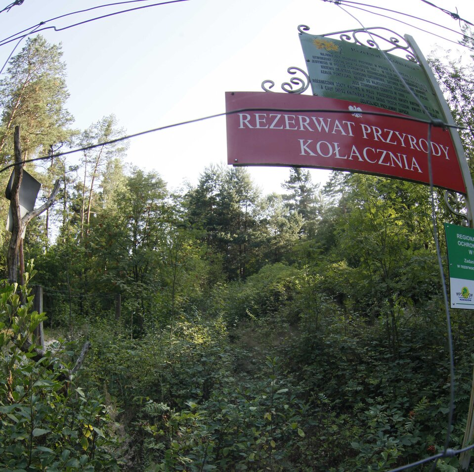 panorama rezerwat Kołacznia