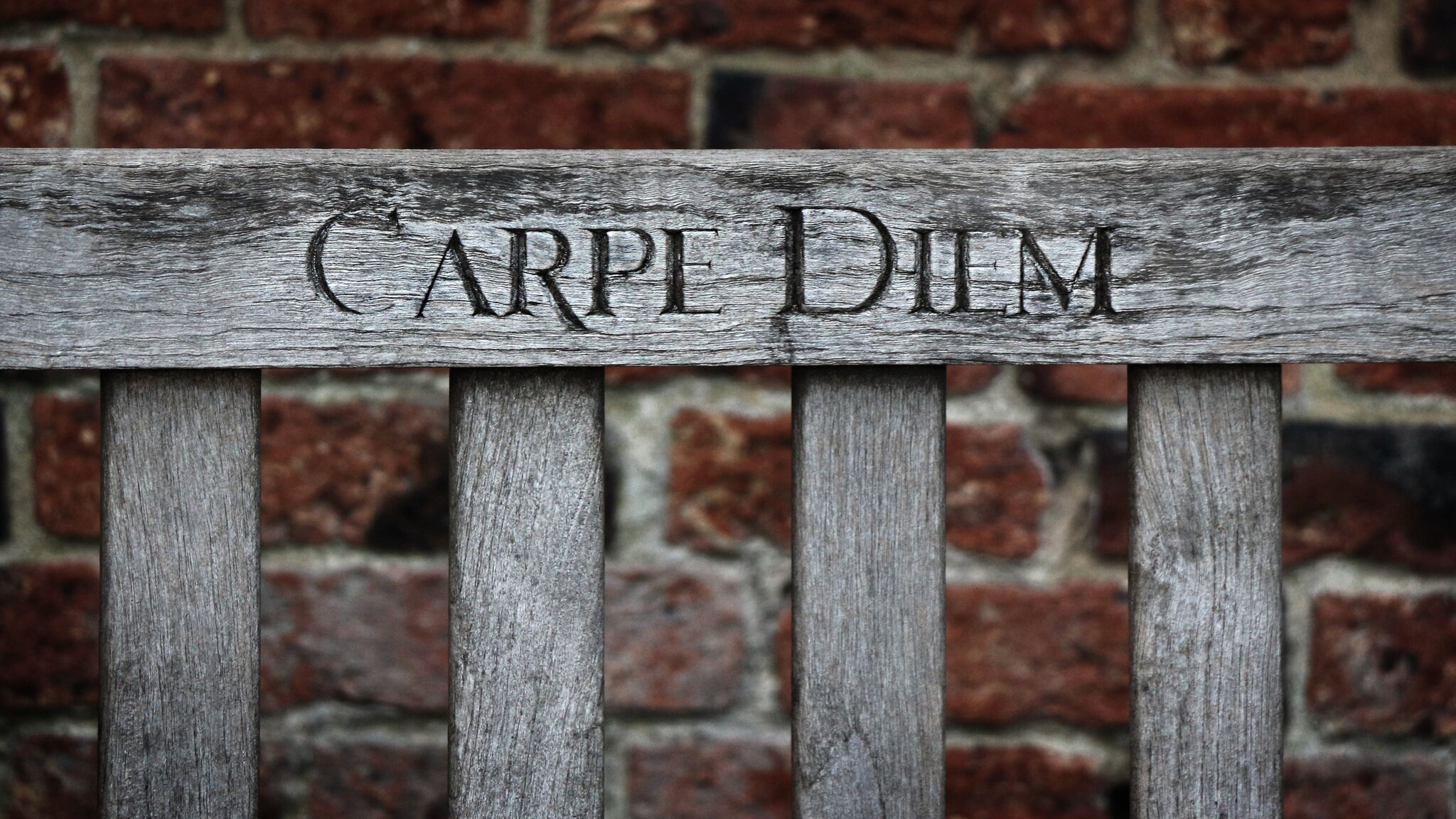 Carpe diem_napis Źródło: Phill Connell, fotografia barwna, licencja: CC BY-NC-ND 2.0.
